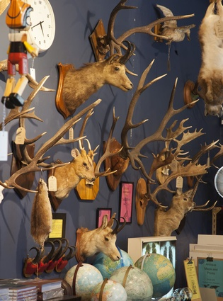 Taxidermy at Brown & Co.