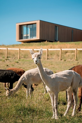 The cedar on the exterior requires very little maintenance as it is left to weather. The llamas feature in this farmyard setting.