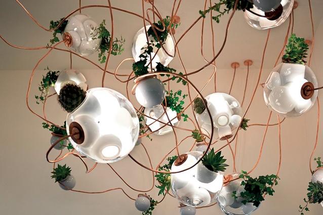 Bocci pendant lighting that grows plants.