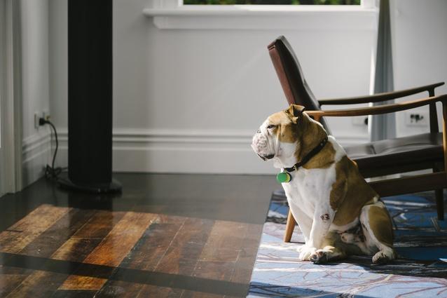 Arthur the dog.
