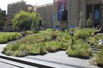 Gone to seed: Grasslands at the State Library of Victoria