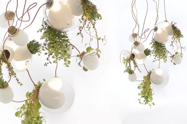 Bocci's 'Series 38' planter chandelier.