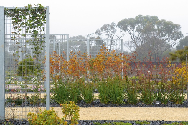 The Cultivar and Research Gardens at the eastern edge of the Australian Garden.