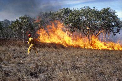 CSIRO fire researcher with experimental grass fire.