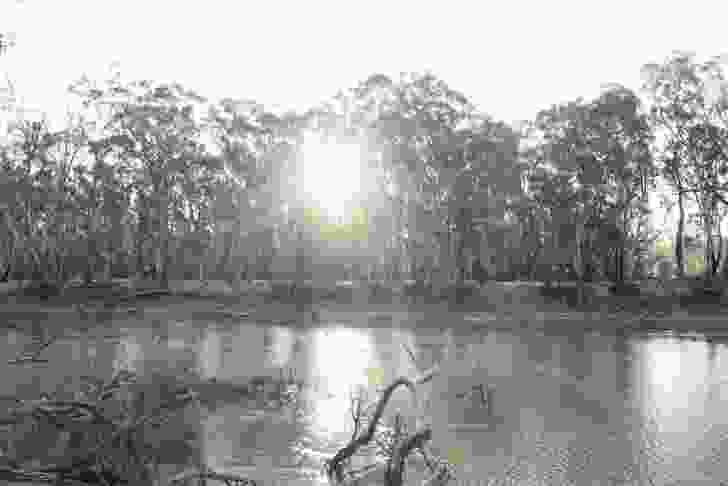 Ring trees were often made from river red gums around the Murray River.