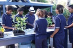 Woodville High School Community Garden Hub