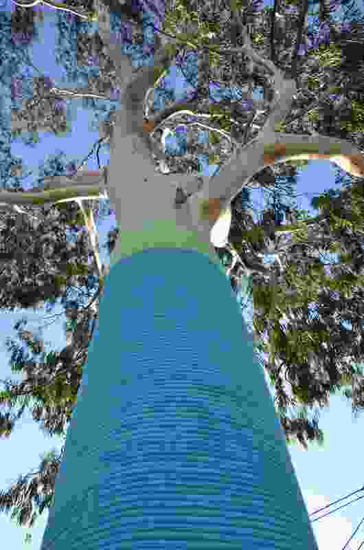 Trees in Edwardes Street, West Reservoir were wrapped in blue and green rope, while trees in Broadway, East Reservoir were wrapped in pink and orange rope.
