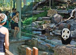 A viewing pavilion at the western edge of the public space accesses one of the outdoor panda exhibits.