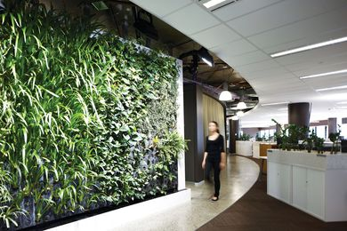 Green walls and plants throughout the Melbourne ISIS office fitouts improve the indoor air quality for ISIS staff.