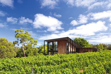The house is set within a vineyard.