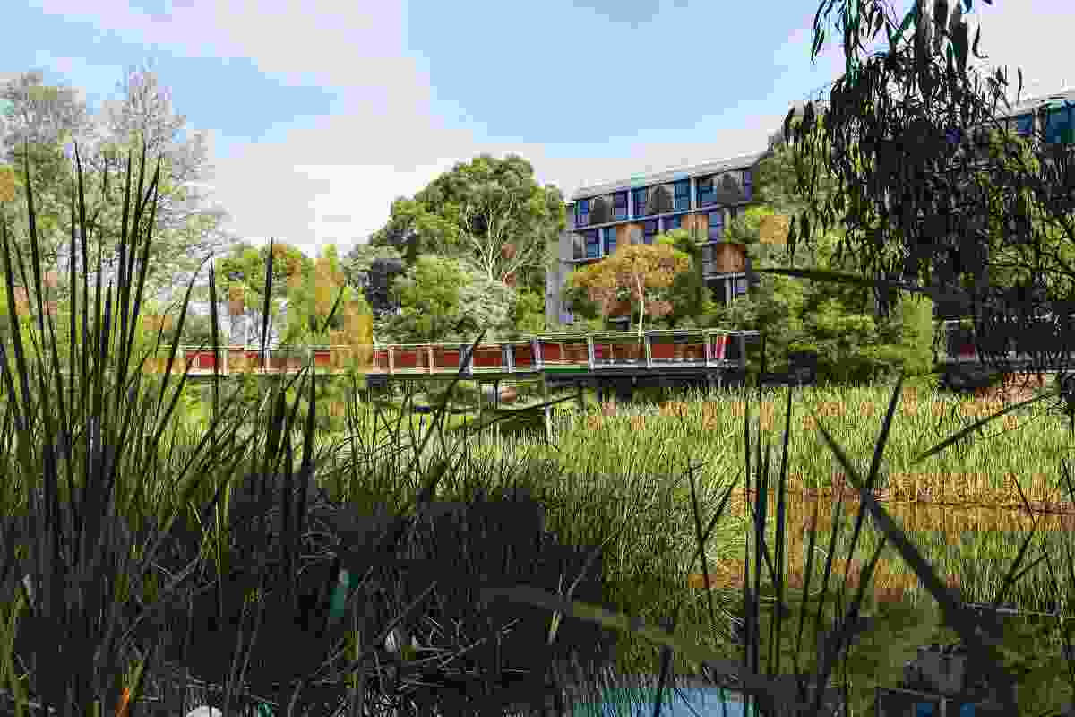 Designed by Urban Initiatives, the Jock Marshall Reserve Nature Walk draws a formerly overlooked green space into everyday student life
