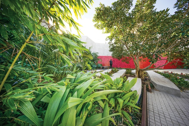 <i>Molineria capitulata</i> (palm grass) grows next to pieces of railway that border the garden beds, evoking Australian POW histories such as the building of the Thai-Burma Railway during WWII.