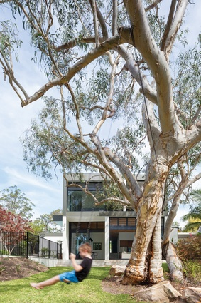 A scribbly gum tree graces the backyard, making for a pleasantly leafy outlook from the living area and first-floor balcony.