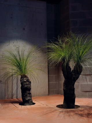 Xanthorrhoea australis (grass trees) were set into the floor at the restaurant.