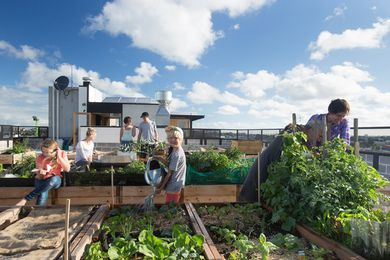 Rooftop garden at the Commons apartments in Melbourne by Breathe Architecture.