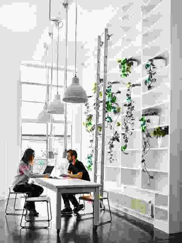 A communal working zone is backed by a high bookshelf traced with greenery and finished with a sliding ladder.