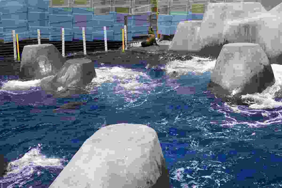 The Seal pool edges are sculpted with specially design slopes and ledges for ease of movement into and out of the water.
