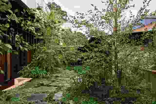 黑桦的种植可以通过花园看到庭院后面的座位区。