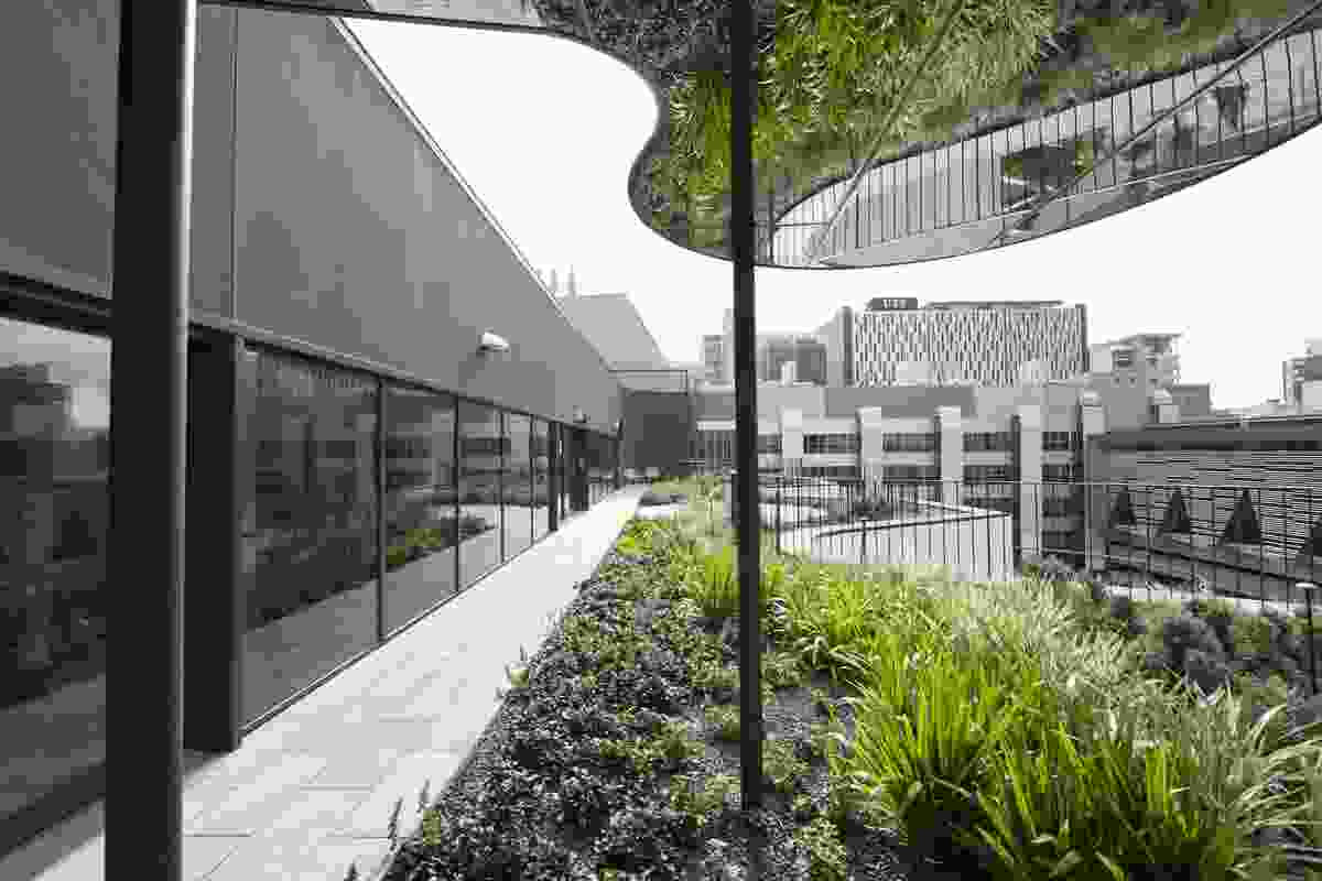 An outdoor green space at the new Faculty of Science and Graduate School of Health at Sydney's University of Technology.
