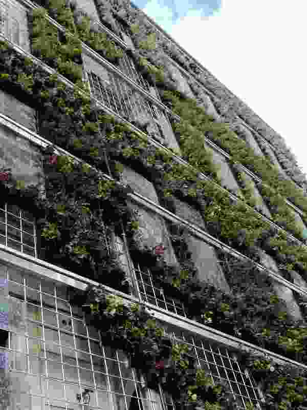 Leading by example – Green Wall on the European Environment Agency building, Copenhagen.