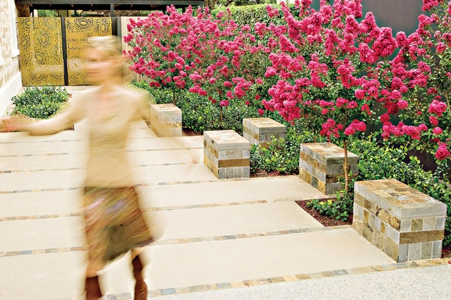 A vibrant display of pink crepe myrtles in the entrance court to the Adelaide villa garden.