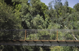 River Torrens Bridge