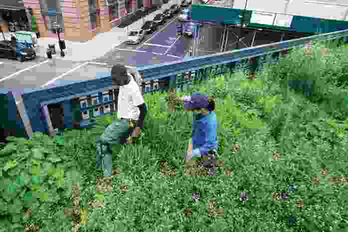 Images of detailed planting design along the High Line.