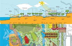 The Lippmann Associates, Richard Rogers Partnership, Martha Schwartz and Lend Lease proposal integrates water and vegetation throughout. The plan and section show the scheme's island precinct.