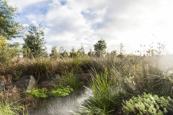 Gum Scrub Creek, Officer by Outlines Landscape Architecture.