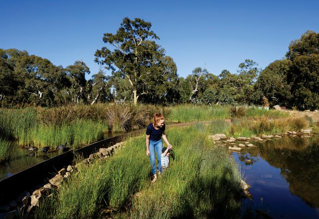 Oaklands Park and Wetland by TCL (Taylor Cullity Lethlean).