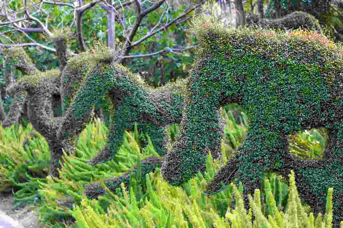 Playful plantings of asparagus fern add a sense of wonder in the children's garden.