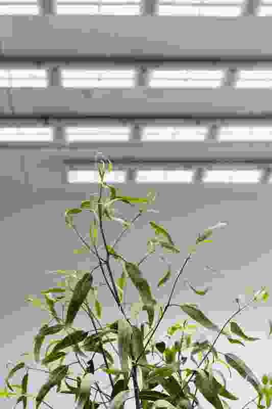 The plants are sustained by a lighting installation which simulates the energy of the sun.